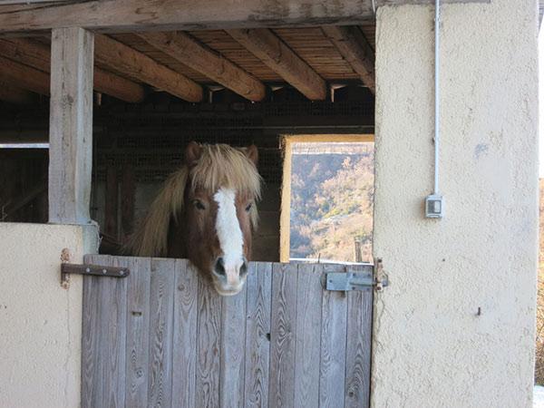 pferde-stall