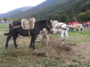 Fiera di Cavalli Catria